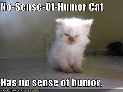 No Sense of Humor Cat